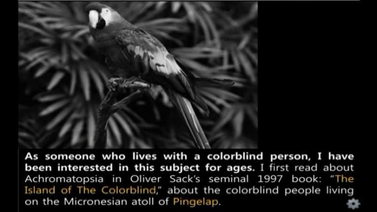 pingelap island of the colorblind essay