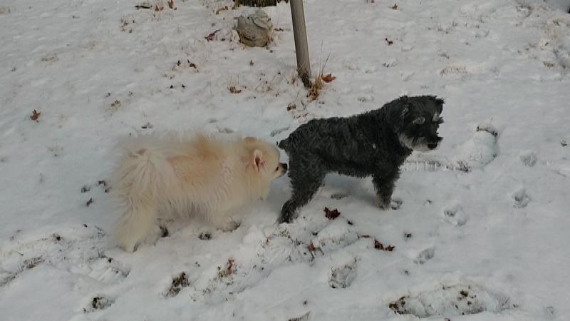 강아지들의 눈밭 나들이...