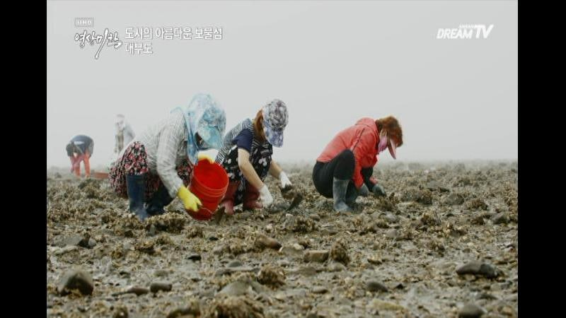 [UHD 영상미학] 아름다운 보물섬, 대부도의 갯벌